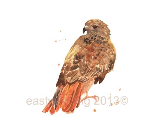 Hawk art 8x10 print Red Tailed Hawk Print by eastwitching on Etsy#woodland #nursery #art #print #wilderness #cabin #boy #grizzly #wildlife #whimsical #nursery #bedroom #art #painting #archival 8x10inch #8x10 #adorable #realistic #décor #kids #wall #etsy #handmade #unique #eastwitching  #hawk #redtailed #bird #bird #of #prey