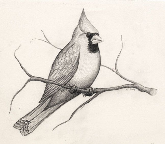 How To Draw A Bird Step By Step Easy With Pictures | Singing Birds | Pinterest | Bird Drawings ...