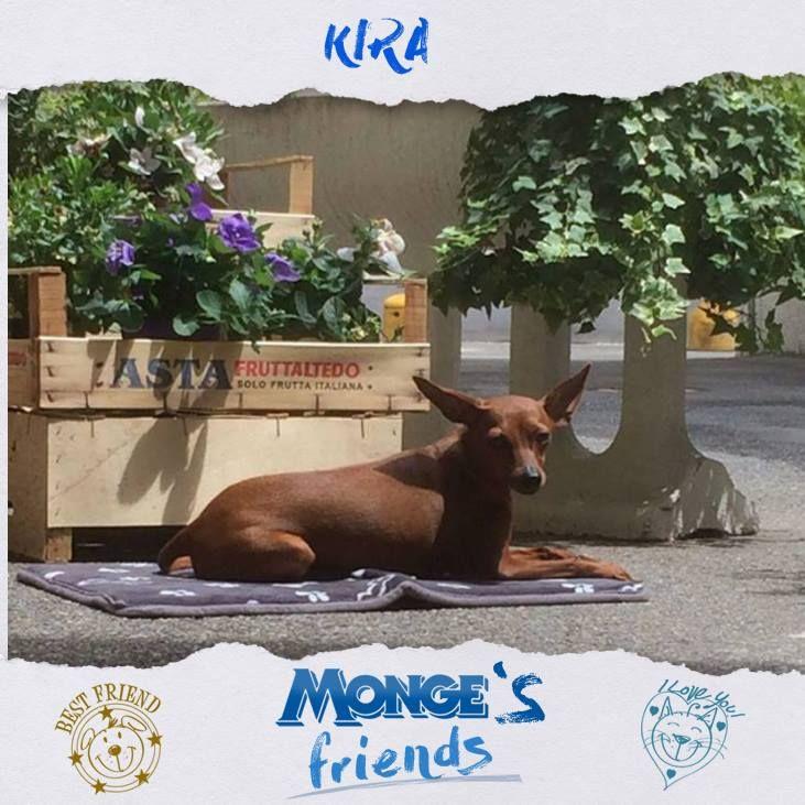 Kira #Mongesfriends