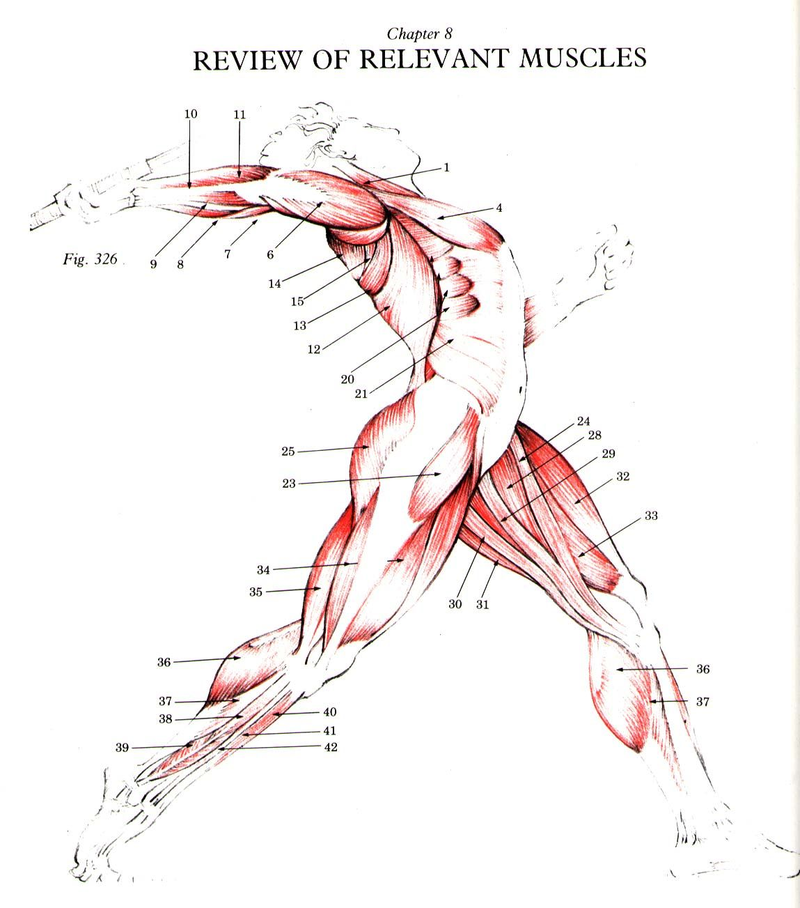 Physics of Sports course, human motion, energy, mechanics, power ...