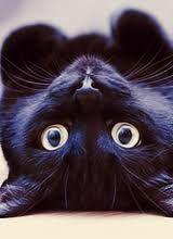 Resultado De Imagem Para Gifs De Gatinhos 160x220 Cats Crazy Cats Beautiful Cats