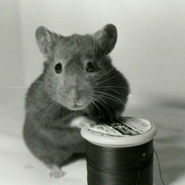 Pin von Jule auf Black&White Tiere, Ratten, Katzen