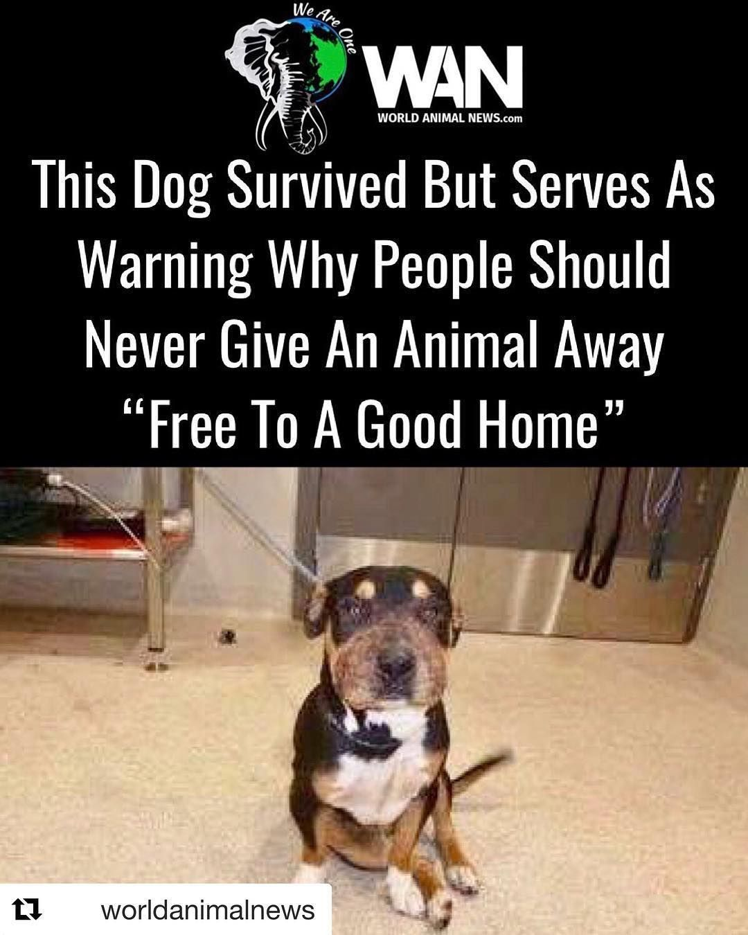 Repost Worldanimalnews With Get Repost An Animal Shelter In