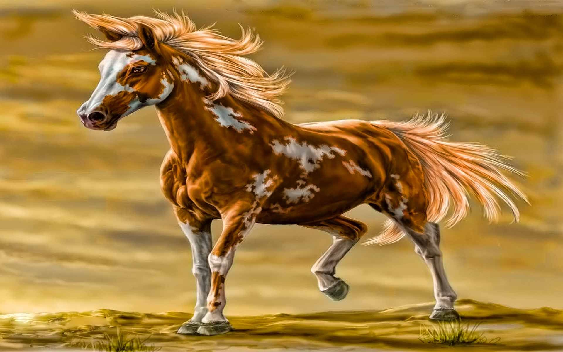 Images > Beautiful Wild Paint Horses Home On The Range