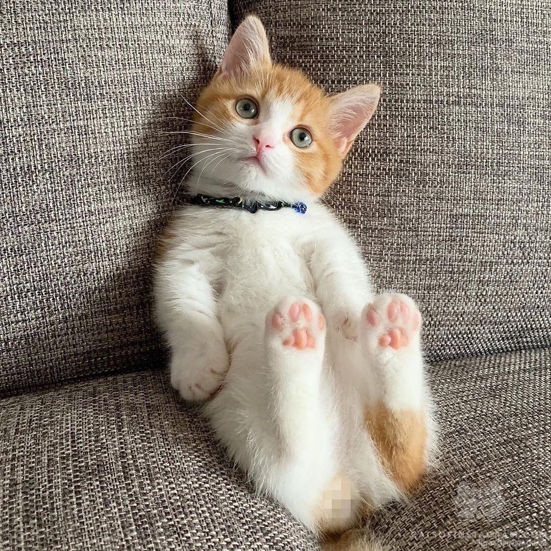 Cute Kitten Click The Link Cute Cats And Kittens Cute Cats Kittens Cutest
