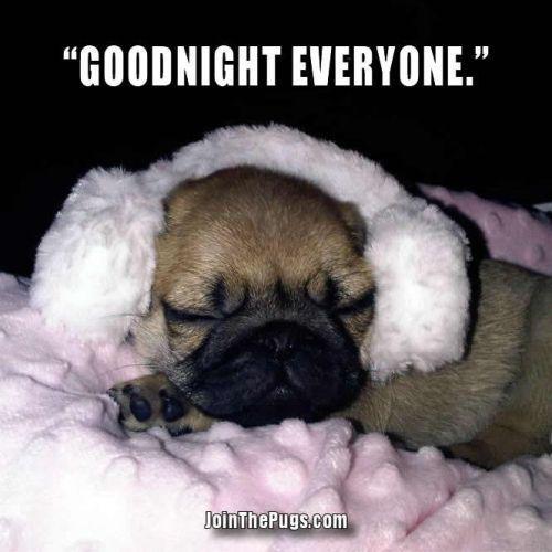 Goodnight Cute Pugs Pugs Cute Animals