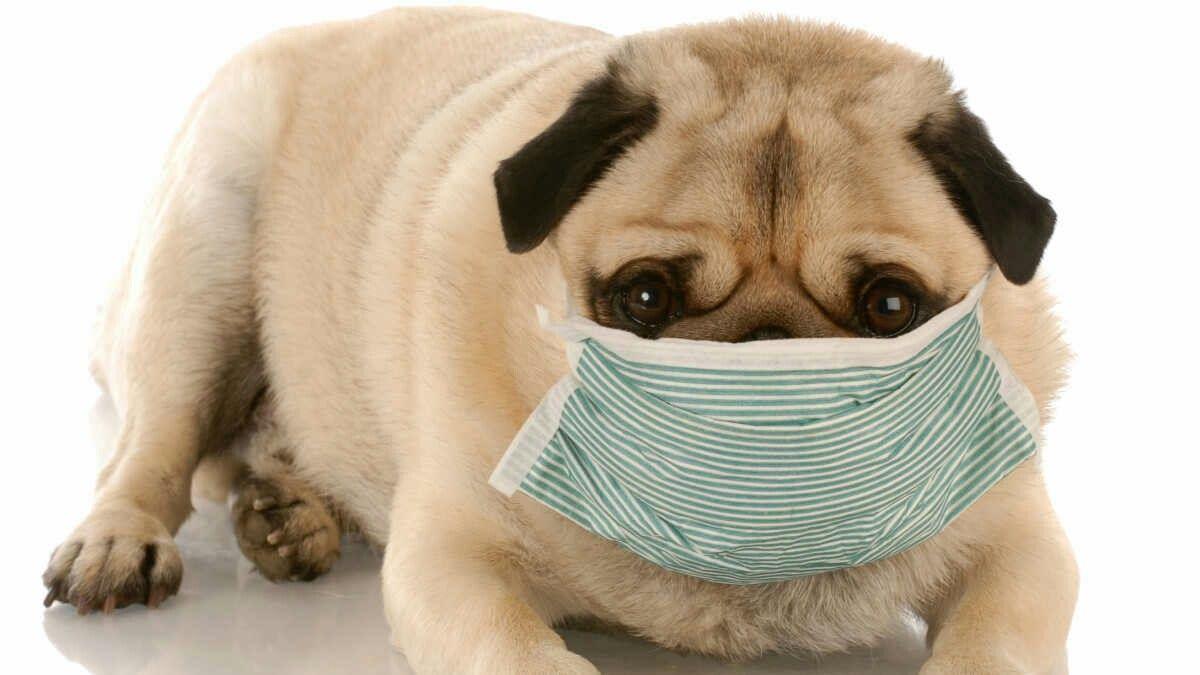 Pin On Life In Quarantine