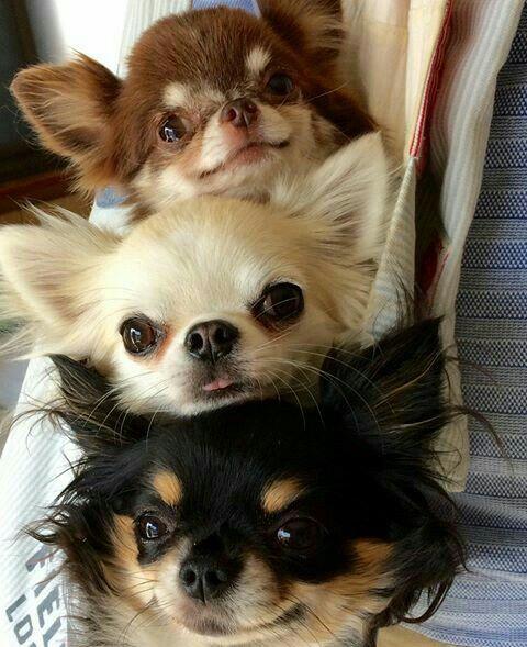 Instagram Ramkira2127 Cute Funny Animals Cute Baby Animals