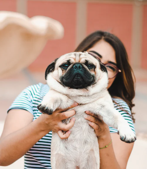 500 Cute Dog Pictures Hd Download Free Images On Unsplash Cute Senior Pictures Cute Dog Pictures Dog Pictures