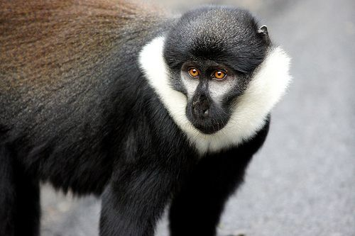 Happy Monkeymonday Geolodges Visituganda Here S A Nice Monkey