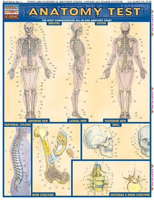 Anatomy Test Download this review guide and improve your grades. #education #ebooks #studyguides #science #math #school #college #teaching #teachers #classrooms #lessonplans #nursing #books #downloads #backtoschool