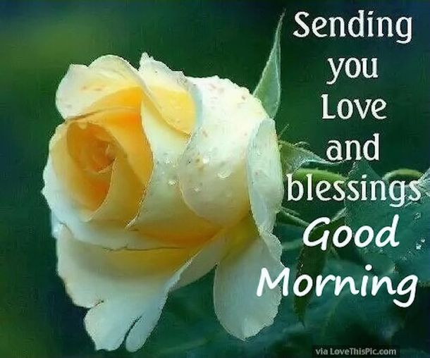 50 Beautiful Good Morning Love Quotes With Images Greetings