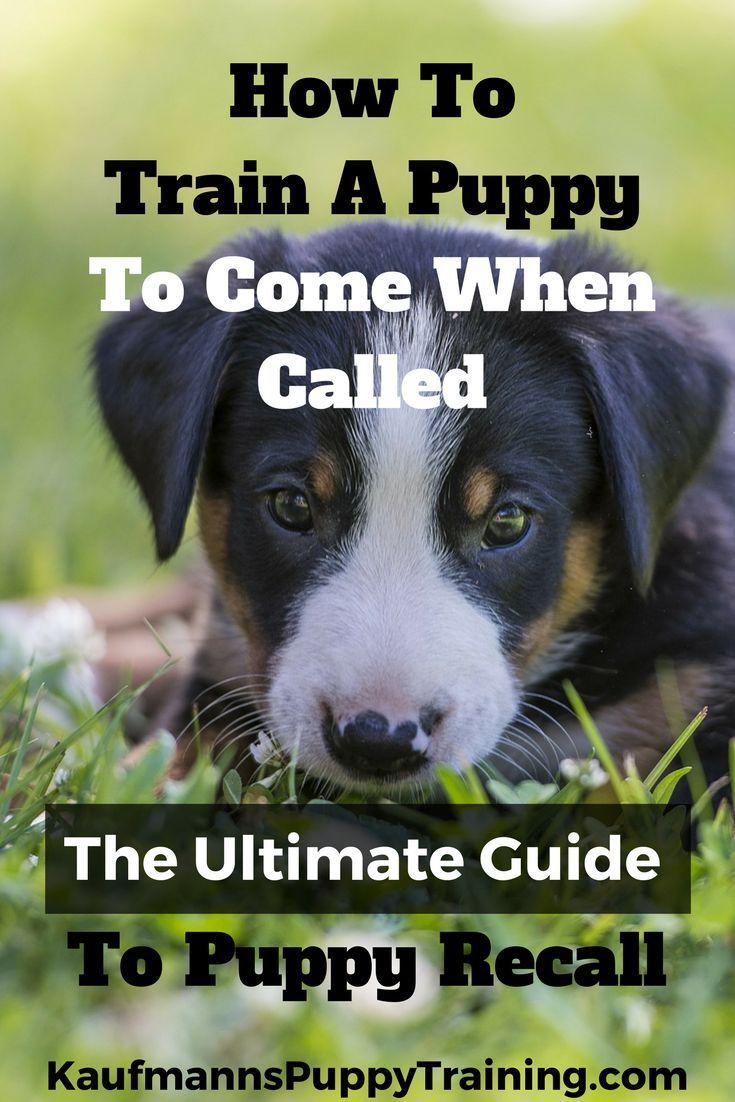 339a864412599bc1e2cd0589a45a6f7f - How Do You Get A Puppy To Come When Called