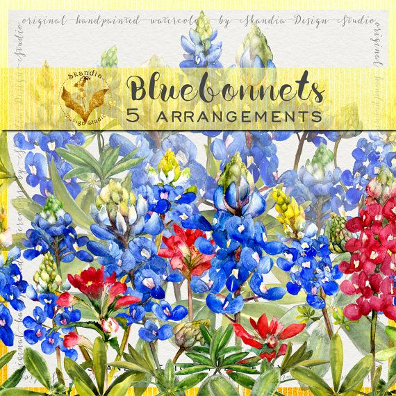 Bluebonnet Clipart Handpainted Wildflower Watercolor Boho Floral Frames Rustic