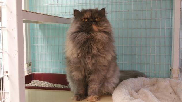 Adopt Georgia On Petfinder Cat Adoption Tortoise Shell Cat Cat Rescue