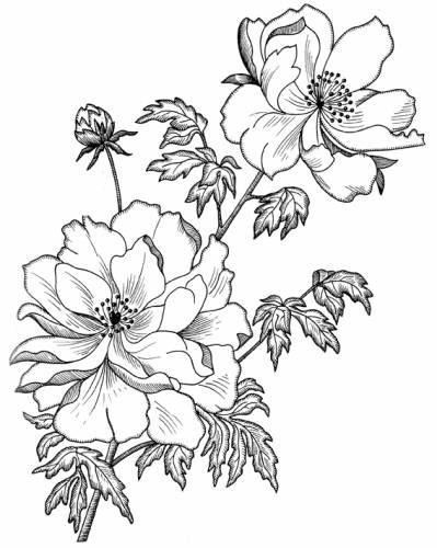 (63) Gallery.ru / Фото #46 - Рисунки для вышивки лентами и ...