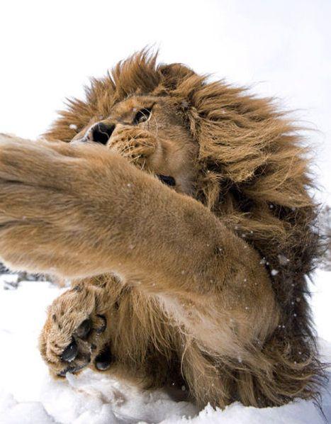 超危険 ライオン ヒョウなど肉食動物に接近遭遇した写真たち ジョナサン グリフィス Jonathan Griffiths Ddn Japan 野生 動物 動物 写真 動物