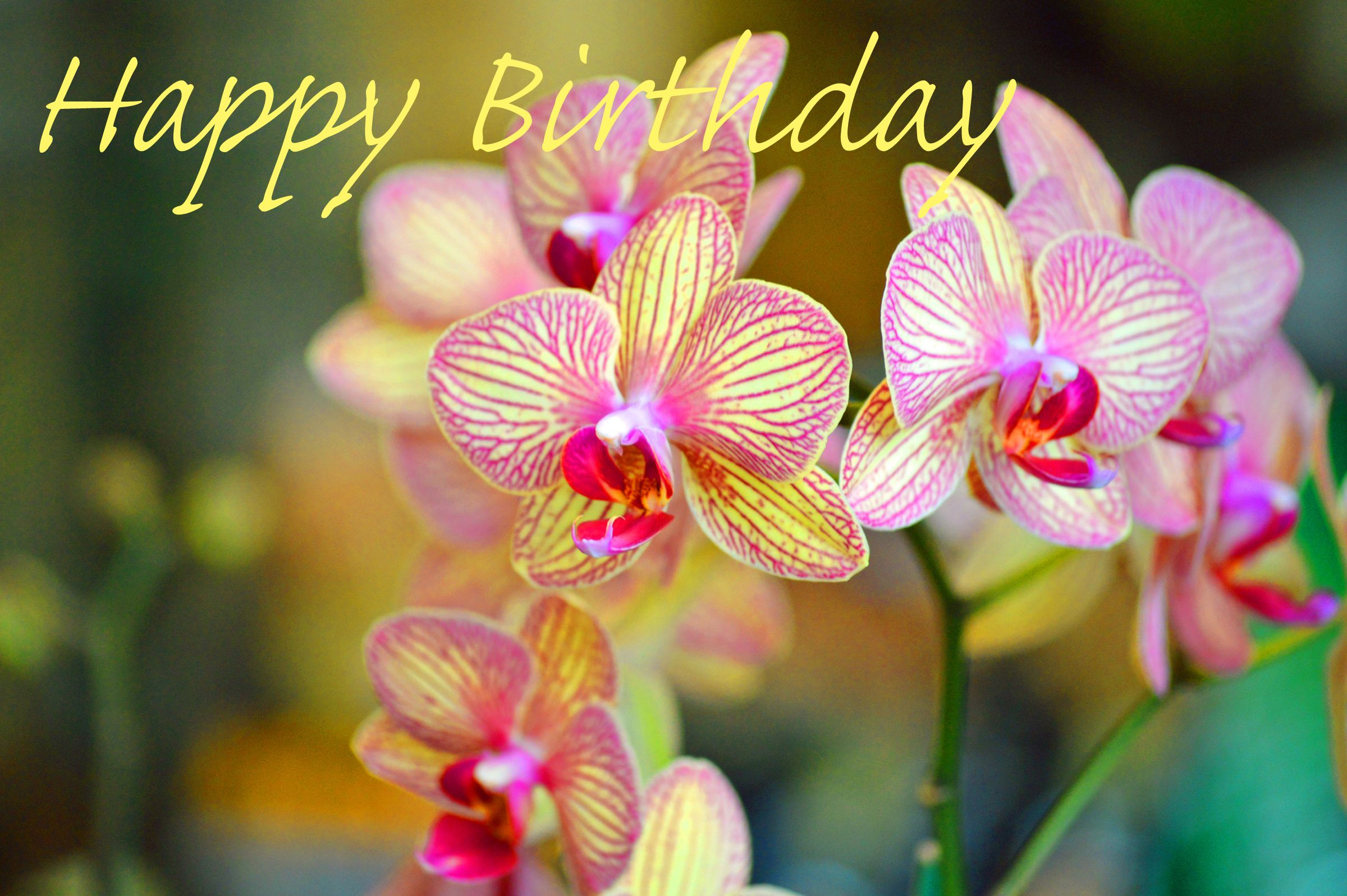 Beautiful Orchids With A Happy Birthday Greeting That Can Be
