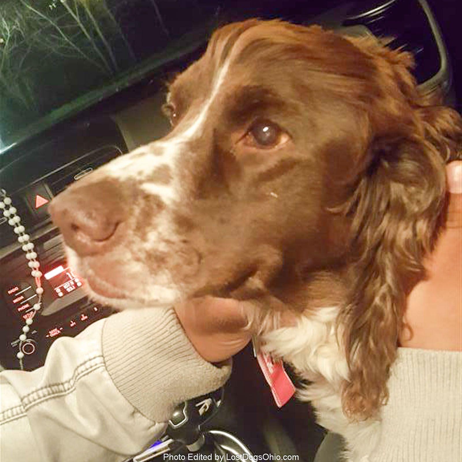 Found Dog Female Columbus, OH, USA 43228 on April 08