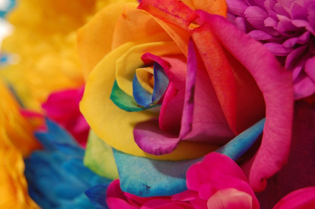 rainbow-flowers-1024×680 | wallpapers55.com - Best Wallpapers for ...