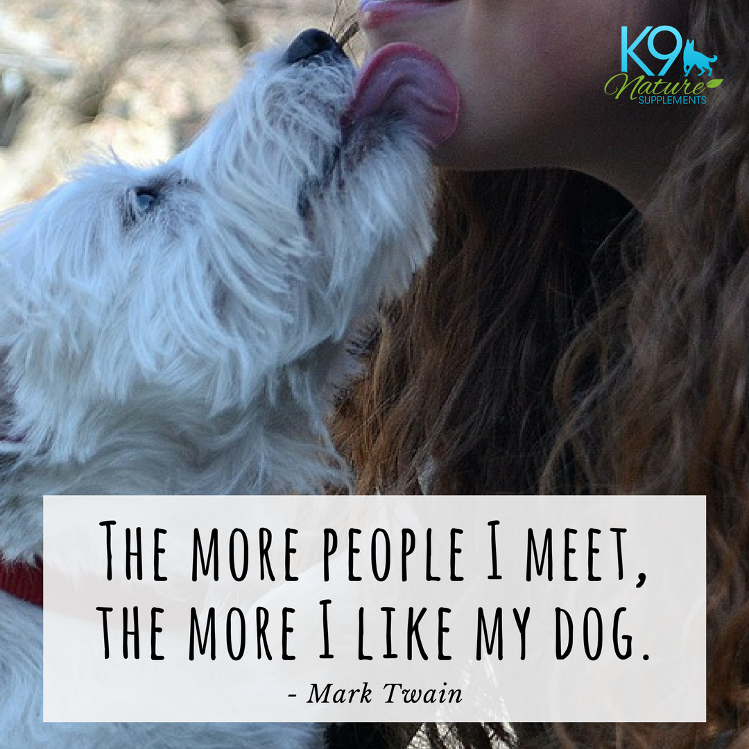 I Love My Dog Quotes Dog Quote From Mark Twain The More People I Meet The More I Like