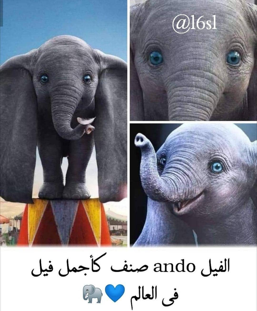 حساب جميل يستحق المتابعة Aiqtibasat Adabia Aiqtibasat Adabia Aiqtibasat Adabia Animals Elephant