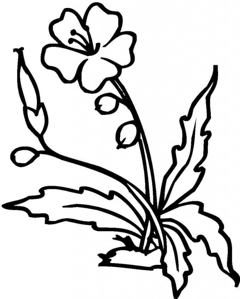 hibiscus coloring pages photos flower coloring pages pinterest
