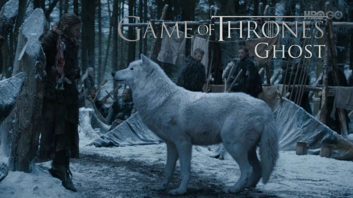 Protect Yourself Game Of Thrones Style Game Of Thrones Ghost