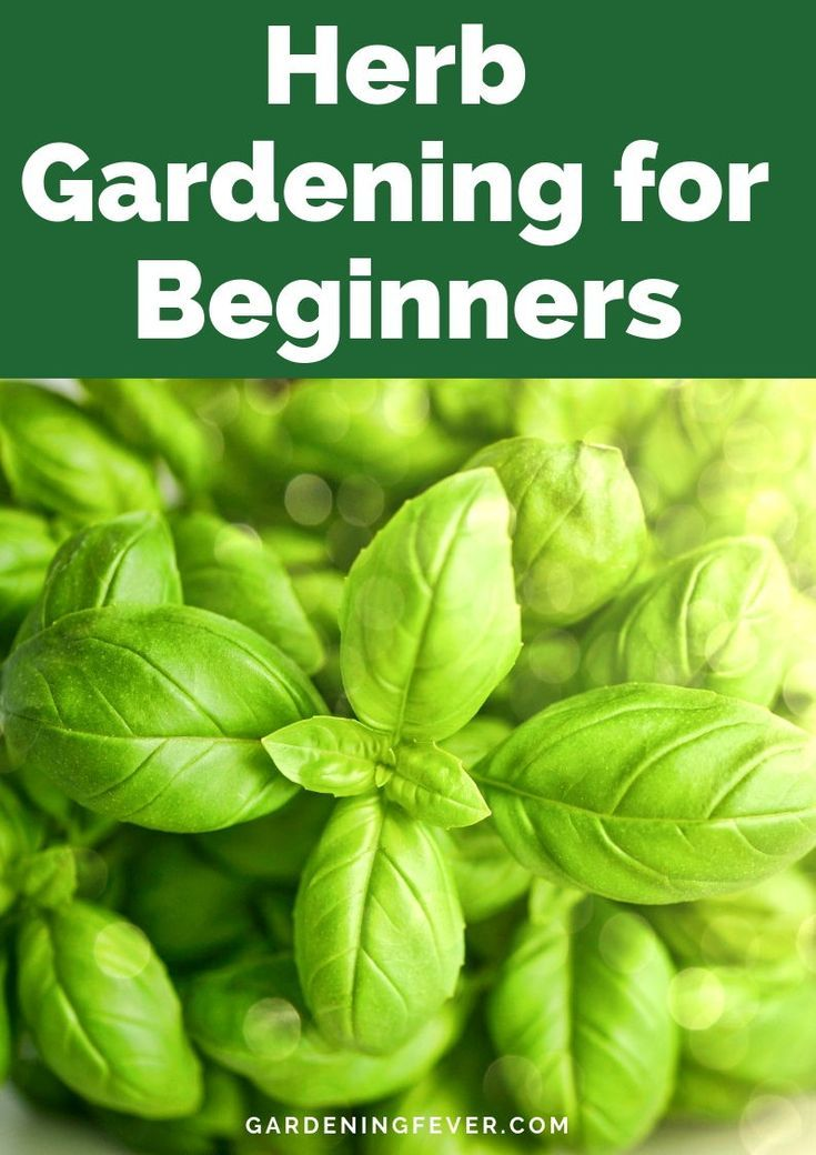 Photo of Herb Gardening for Beginners – Gardening Fever