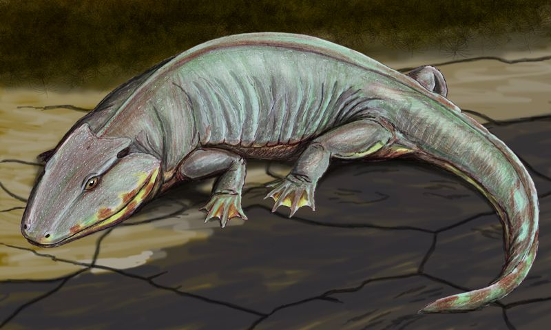50++ Prehistoric amphibians ideas