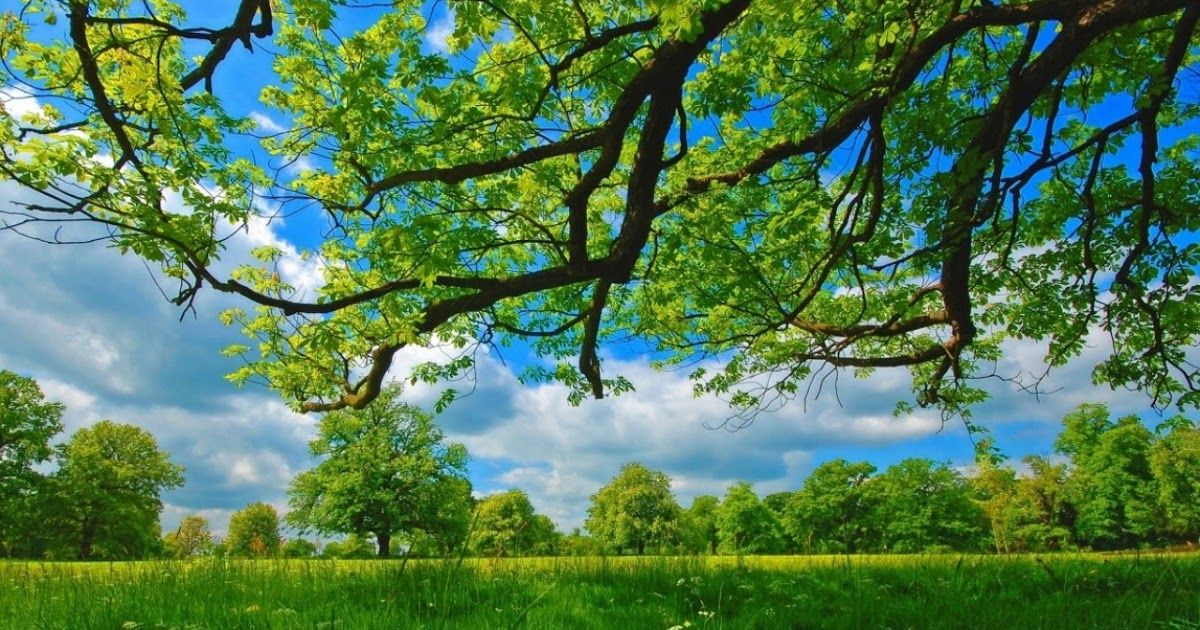 16 Hd Nature Wallpapers For Computer Di 2020