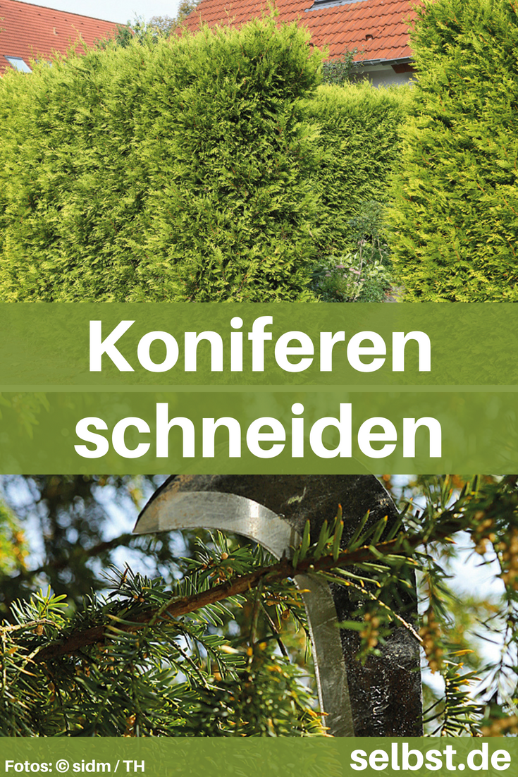 koniferen schneiden | blumen, pflanzen & gemüse | pinterest | garten