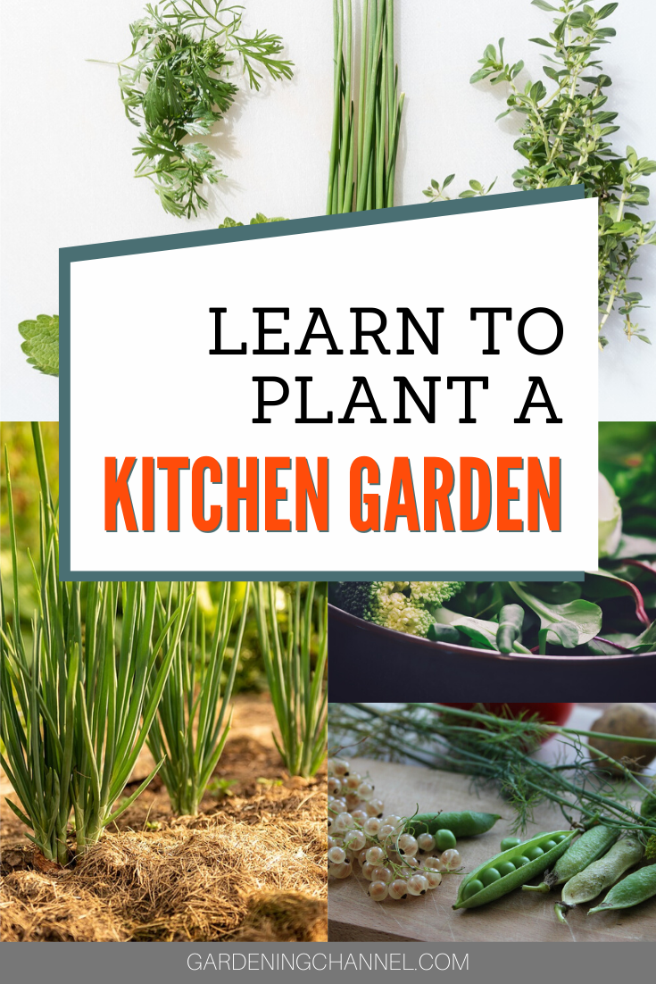 How To Grow A Kitchen Garden Gardening Channel In 2020 Growing Plants Indoors Vegetable Garden Design Kitchen Garden