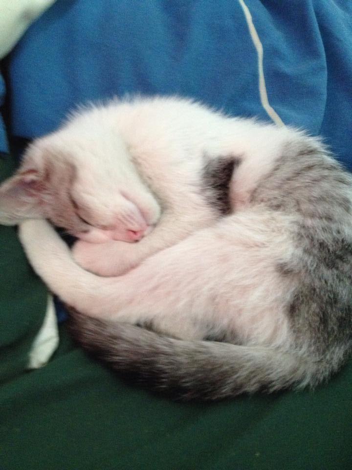 hecho bolita :3 | mi Gato | Pinterest | Bolitas y Gato