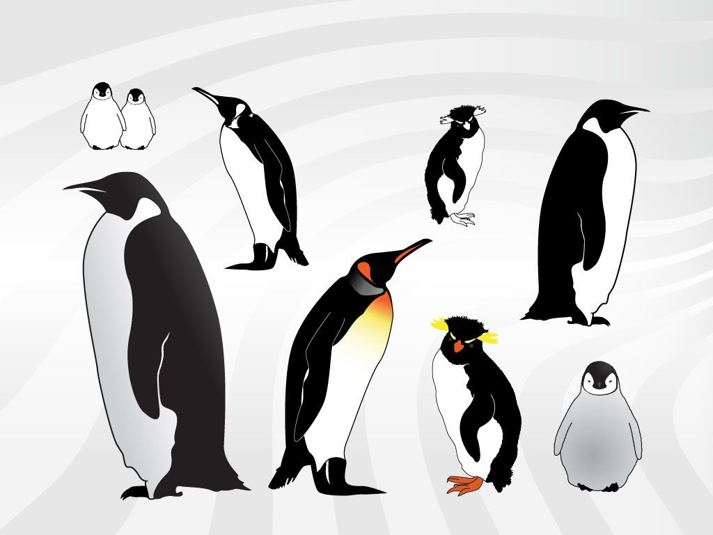 Penguin Illustrations Penguin Illustration Penguins Aquatic Birds