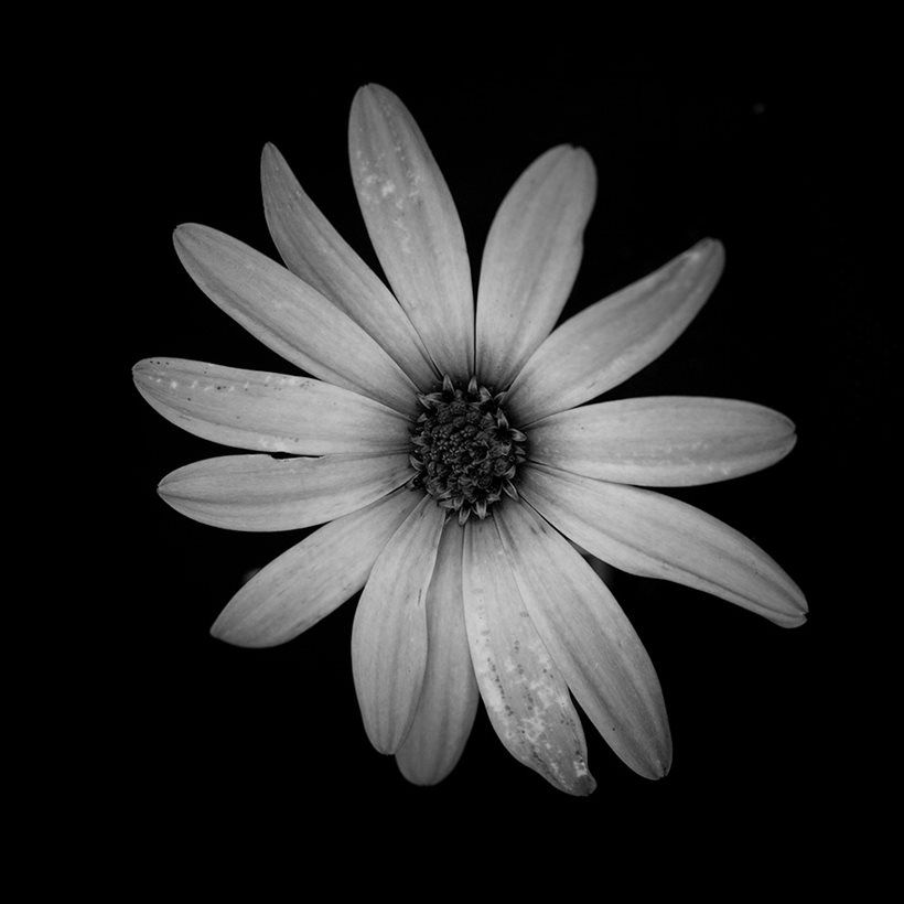Black and white flower carlo van wyk theres a certain slant of black and white flower carlo van wyk mightylinksfo Image collections
