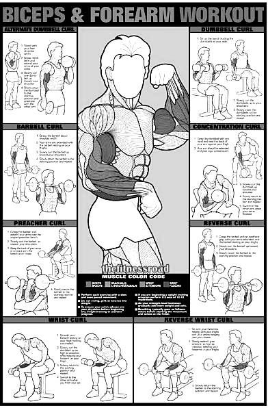 bicep-workout | Exercise | Pinterest | Workout schedule, Biceps ...