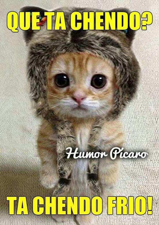 Pin De Roberto Guadalupe En Humor Gatos Bonitos Gato Disfrazado Gatos