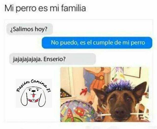 Siguenos En Facebook E Instagram Como Pasioncanina21 Memes Divertidos Memes De Animales Divertidos Memes Famosos