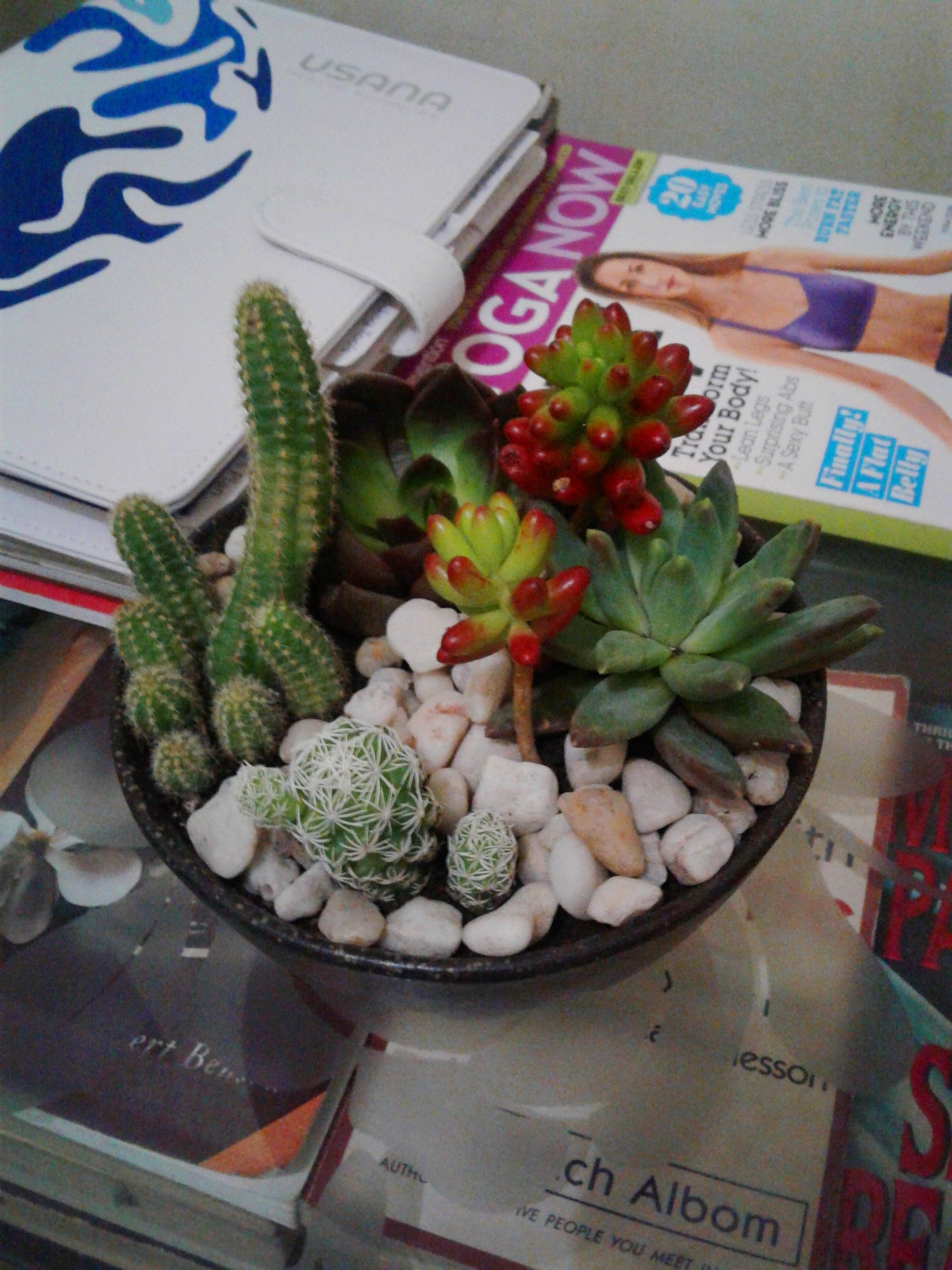 Assorted cacti u succulents in a pot by earth delights joyofjay