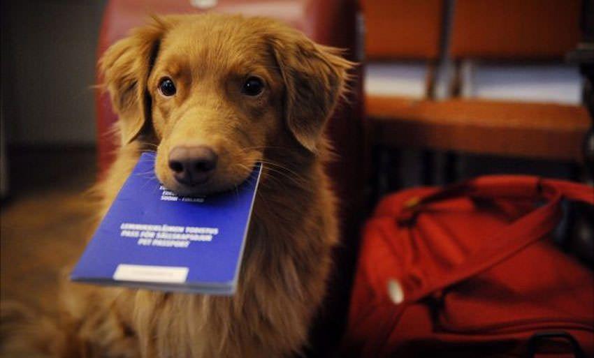 Passaporto animali