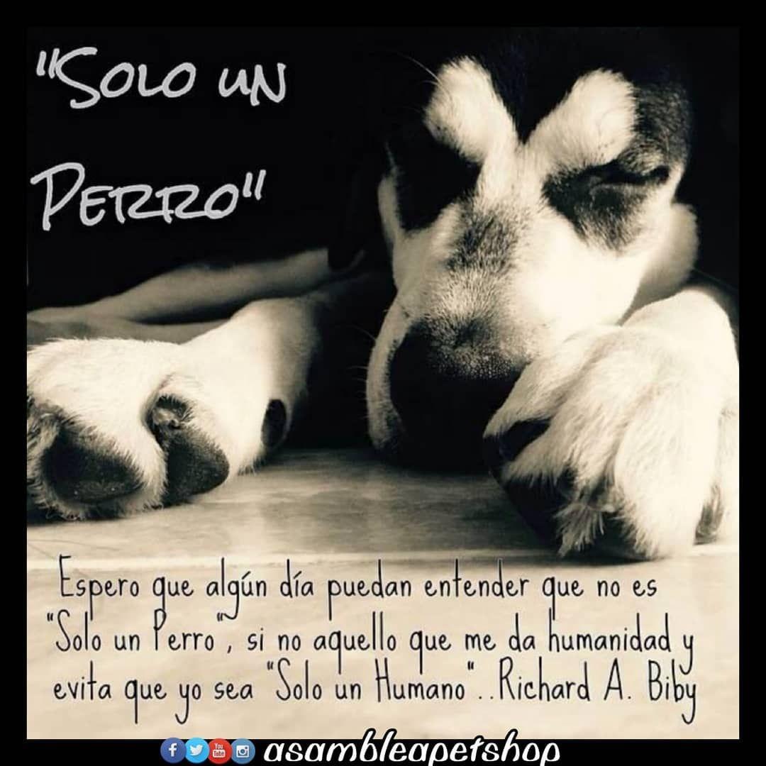 No Es Sólo Un Perro Y Con él No Soy Sólo Un Humano El Mundo Sería Más Hermoso Si Todos Tuvieramos Corazón De Perros Frases Perros Amor De Perro