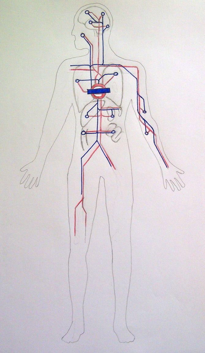 Circulatory System Tube Map Idea Bertie Pleass Body Architecture