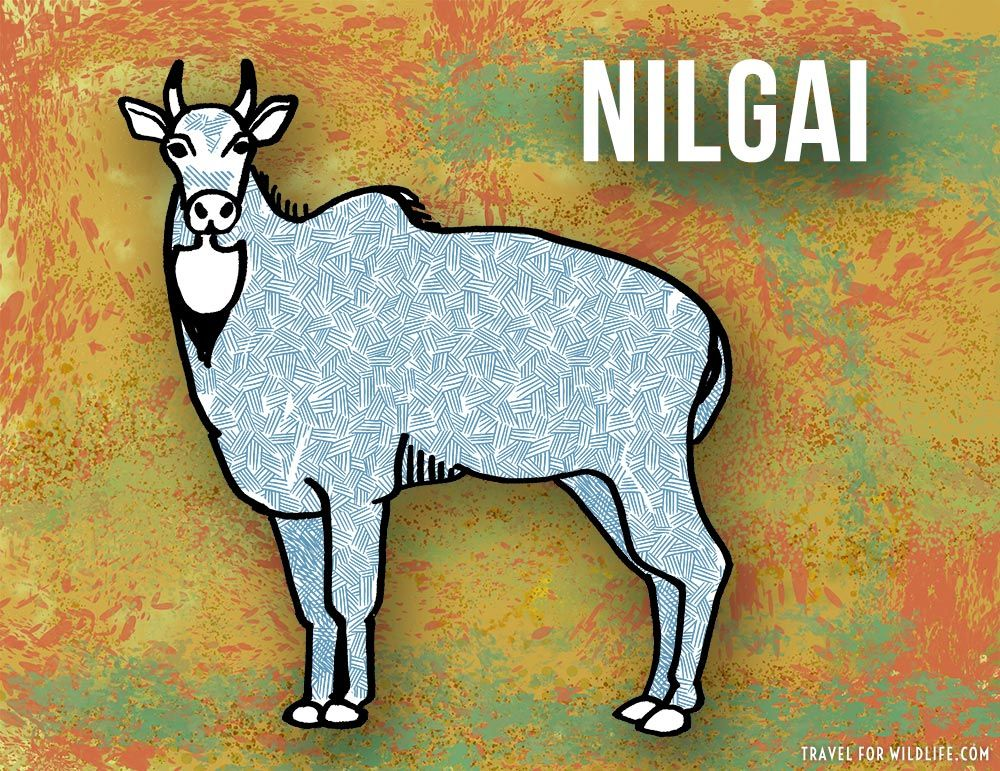 37 Animals That Start With N Animals Really Cool Drawings Animal Drawings