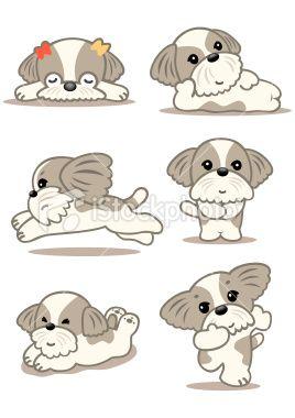 Shih Tzus In Action With Images Shih Tzu Shih Tzu Puppy Shih
