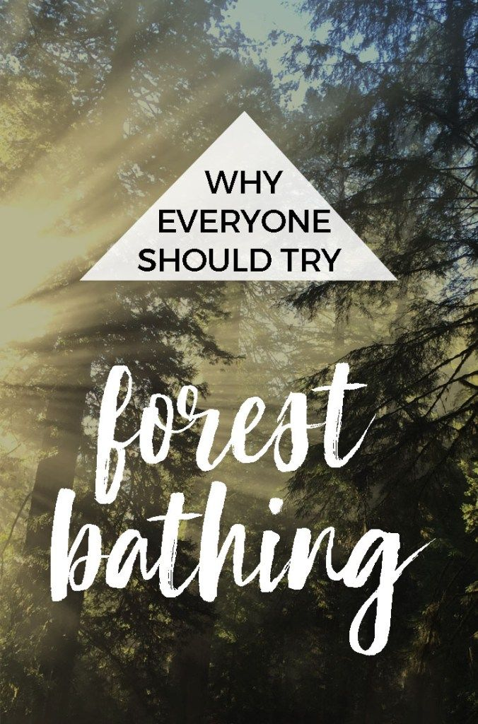 How (and Why) to Try Forest Bathing : The Benefits of Shinrin-yoku : What's the definition of forest bathing?Forest bathing, also called forest therapy, is simply spending time in nature with a quiet mind that allows you to experience your surroundings with all your senses. Take in the sights, smells and sounds. What is a forest bath? Where can I go forest bathing near me? #forestbathing #shinrinyoku #resolutions2018