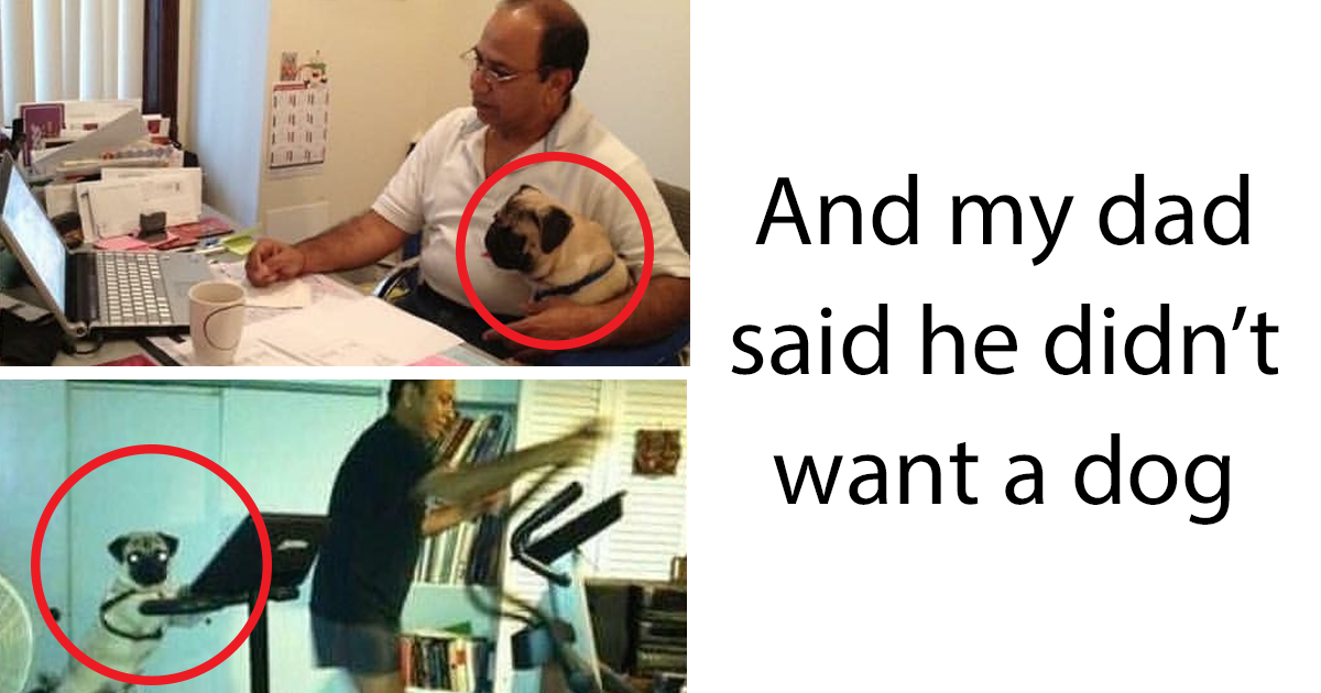 Pictures Of Dads Who Didn T Want Dogs