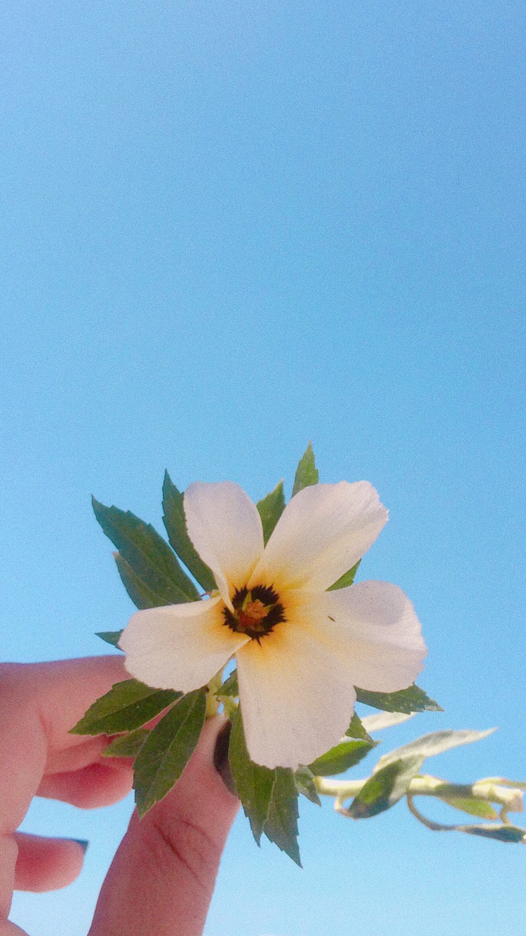 ᏢᏆNNᎬᎠ FᎡᎾᎷᏆᏚᏚᎪᎠᏌᏴᏴ🖤 Iphone wallpaper, Flowers, Floral