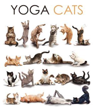 Yoga cat / kitten ..... #yogafun #yogahumour #yogalaughter #yogafunny #yoga #om #yogacat #yogakitten