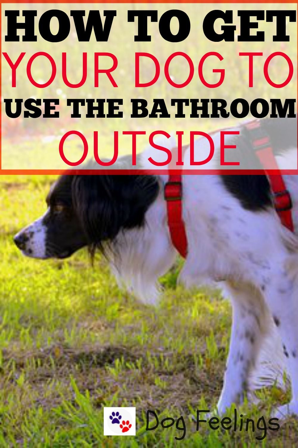 How To Get Your Dog To Use The Bathroom Outside Https Dogfeelings Com Get Dog Use Bathroom Outside Big Dog Little Dog Outside Dogs Dog Advice